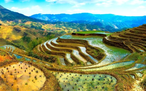 A rice terrace in the Philippines
